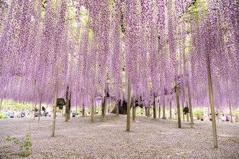花のカーテン.jpg